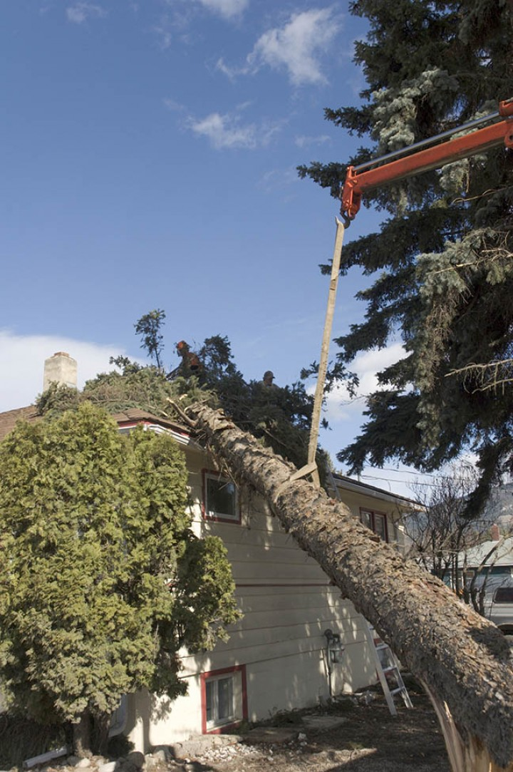 Know about tree removal using cranes