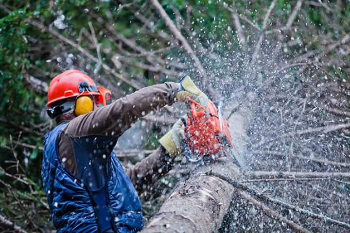 5 Things to Consider Before Doing Tree Removal