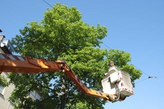 Learn about the popular techniques of tree removal