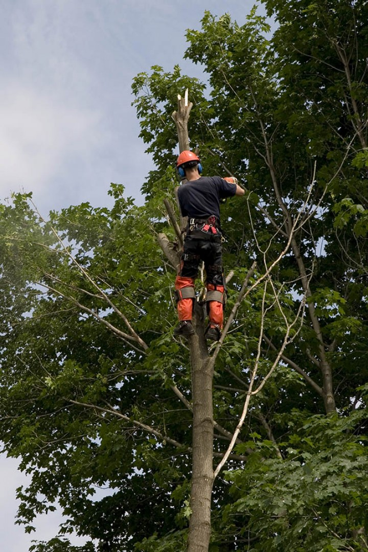 Tips for Finding a Tree Service